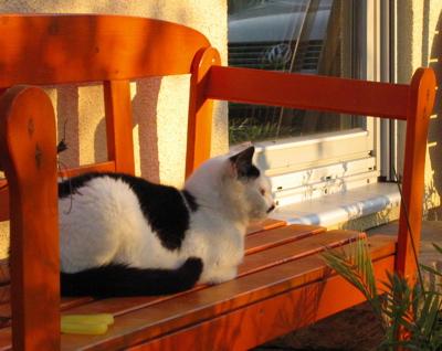 Anica sonnt sich auf der Bank