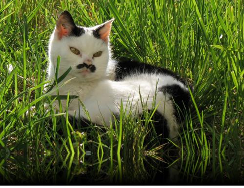 Katze Anica auf der Wiese