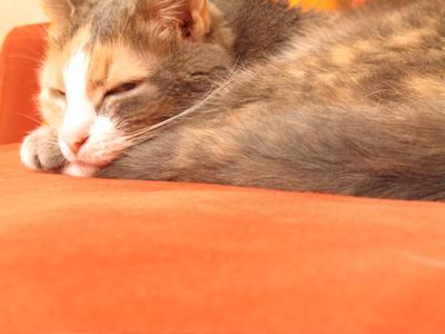 Grisou auf dem Sofa
